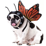 Butterfly Pet Costume 100-211999